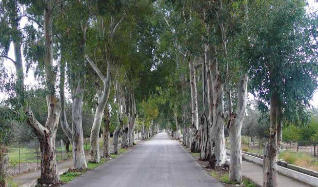 """Relacja z czwartego szkolenia praktycznego """"Aleje przydrożne – planowanie, utrzymanie, diagnoza stanu zdrowotnego drzew oraz waloryzacja walorów przyrodniczych"""""""