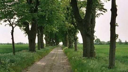 Interesujące publikacje na temat drzew i alej