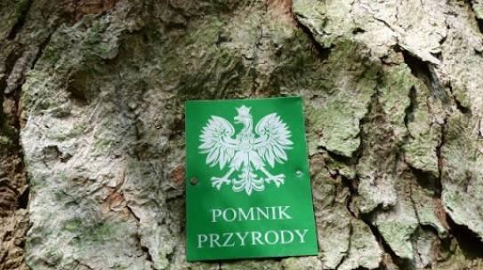Dwie aleje w województwie zachodniopomorskim ustanowione zostały pomnikami przyrody w 2019 roku