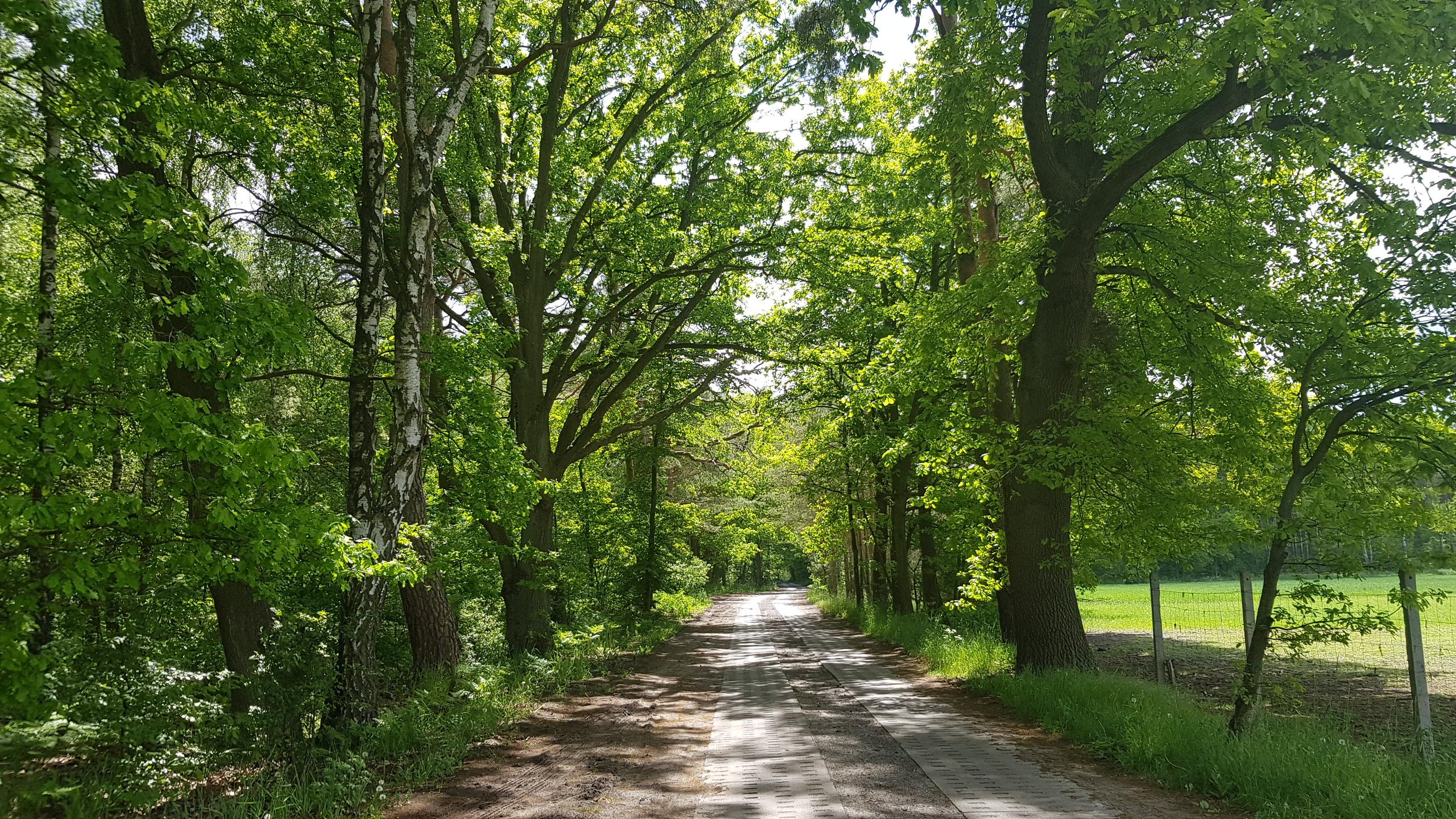 """Relacja z drugiego szkolenia praktycznego """"Aleje przydrożne – planowanie, utrzymanie, diagnoza stanu zdrowotnego drzew oraz waloryzacja walorów przyrodniczych"""""""