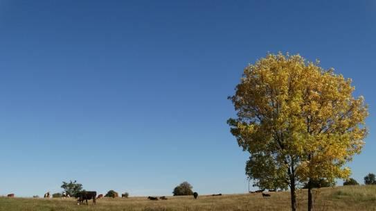 Dzień Krajobrazu