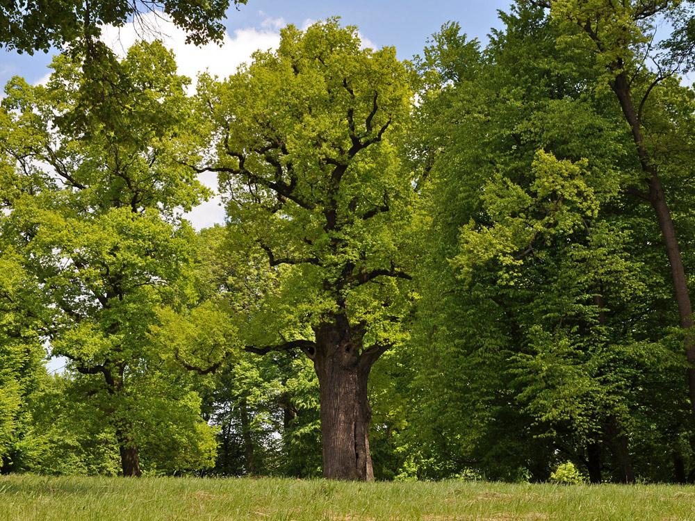Europejskie Drzewo Roku na półmetku!