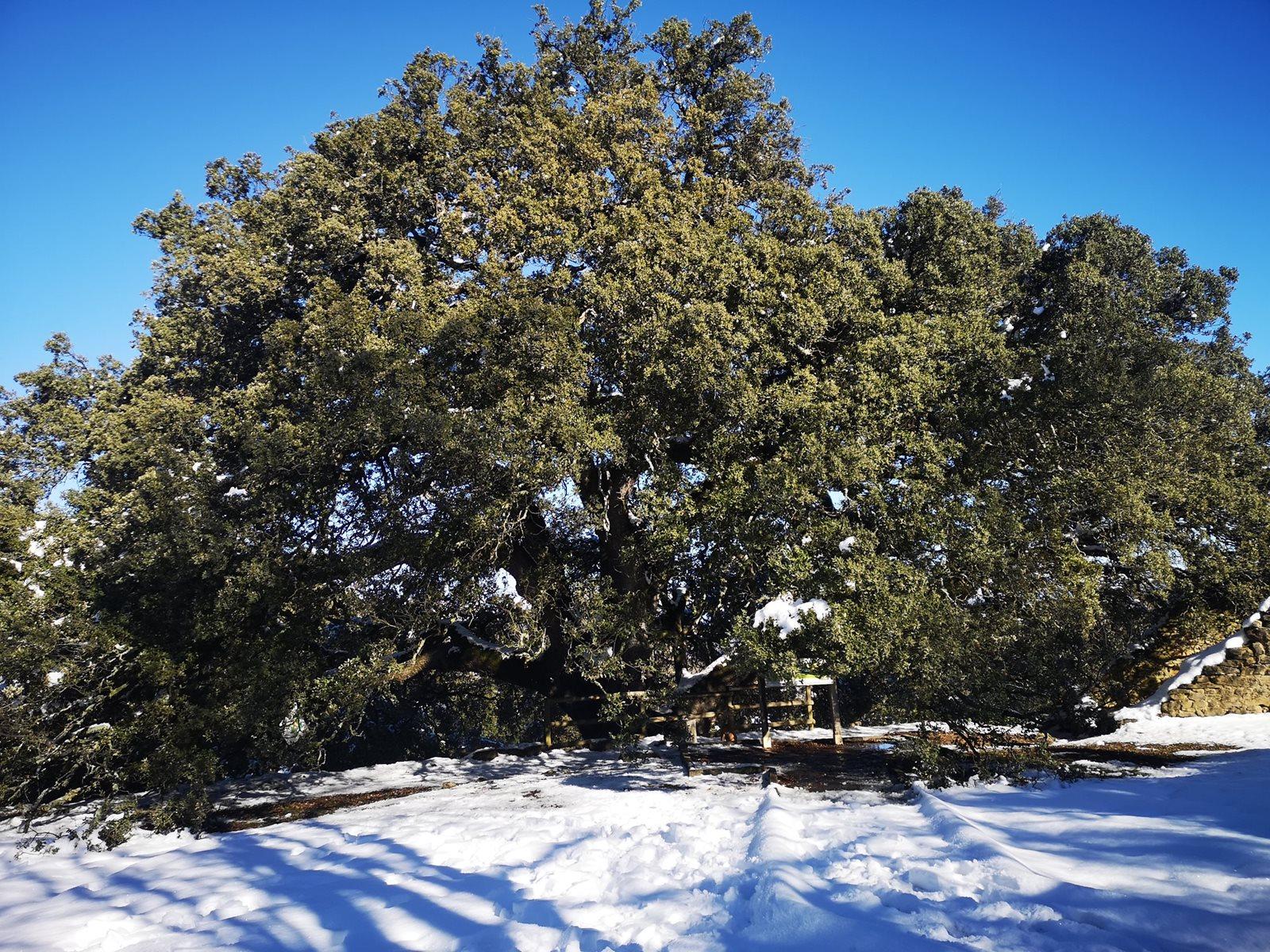 Konkurs Europejskie Drzewo Roku rozstrzygnięty!