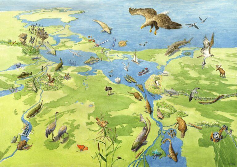 Organizacja Rewilding Oder Delta uruchamia polsko-niemiecką witrynę internetową nt. rewildingu