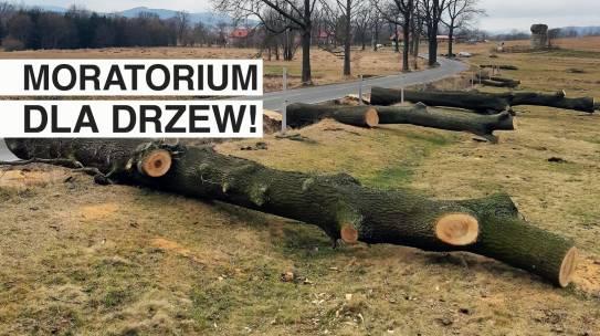 Moratorium dla drzew!