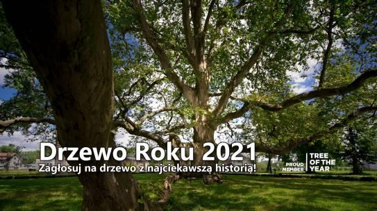 Konkurs Drzewo Roku 2021 ogłoszony – zagłosuj na drzewo z najciekawszą historią