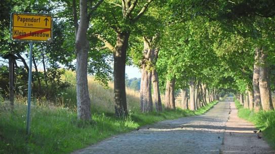 Wspieranie pielęgnacji drzew przez Fundusz Alejowy Meklemburgii-Pomorza Przedniego