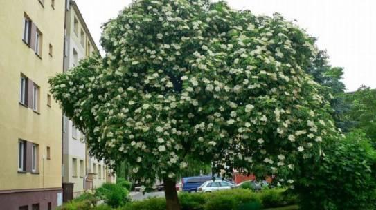 Summer in the City – nawet pojedyncze drzewa chłodzą otoczenie w mieście