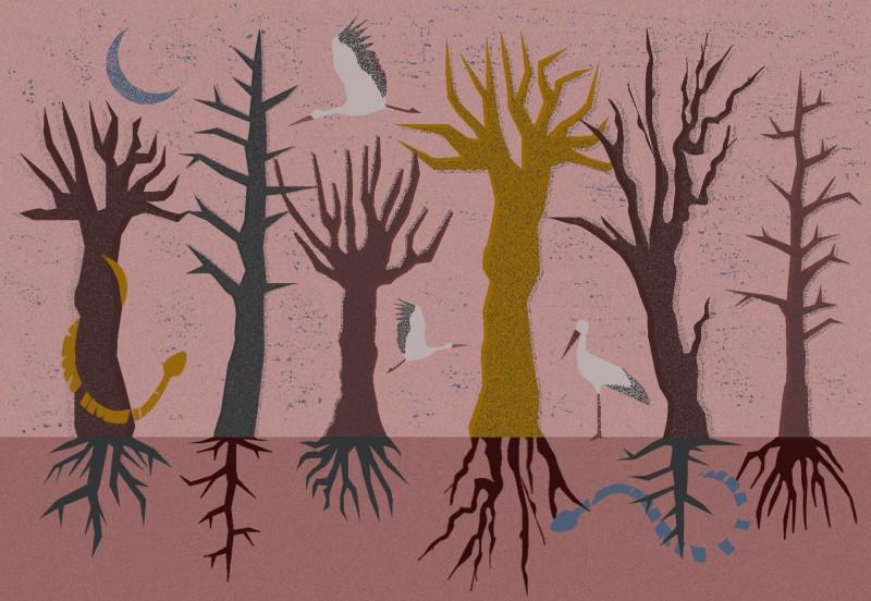 W KORONACH, POD KORZENIAMI wykład o drzewach – live stream 11.04.2021 r. o godz. 20:00