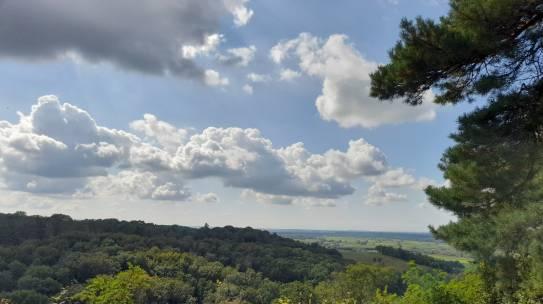 Europejski Tydzień Lasów w listopadzie